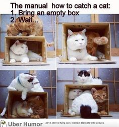 how to catch a cat :D The first cat's face in the last panel kills me!