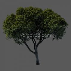 Free models.....trees, cars, cloth, trains and some other commercial ones. 3ds Max and Vray