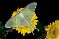 Shock Therapy: Full Moon in Pisces I: Josiah's Luna Moth