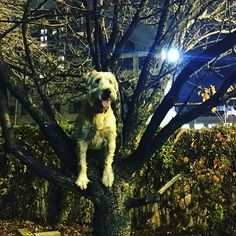 Chicago Apartments - River North dogs love adventuring at Ohio St. Dog Park! #dogsofinstagram #chicago #chicity_shots