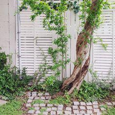 garden (撮影日 5/11)