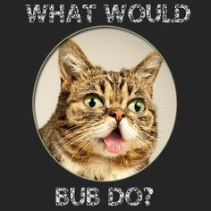 Lil Bub! [The Bliss Blueprint blog]