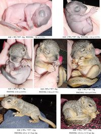How To: Baby Squirrel Care