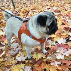 Autumn had sprung! No wait, that's not right… Fall... | Boodapug