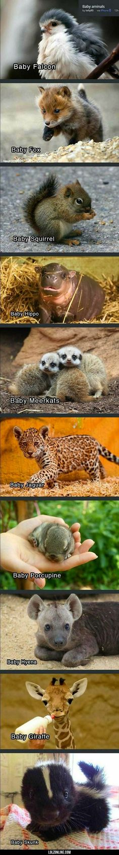 This pic is so cute! I can't believe how adorable baby animals can be! The Animals, Baby Animals Pictures, Cute Little Animals, Cute Animal Pictures, Cute Funny Animals, Funny Cute, Cute Dogs, Cute Babies, Small Animals