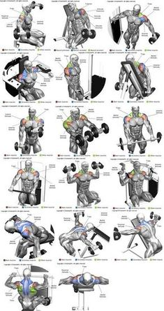 Workout Exercise Shoulder workouts to target specific muscle. - The Ultimate Shoulder Workouts Anatomy. We've put together this graphic of different types shoulder workouts. Knowing the anatomy of each muscle group is Fitness Workouts, Gym Workout Tips, Weight Training Workouts, Biceps Workout, Fitness Motivation, Sport Motivation, Traps Workout, Workout Routines, Deltoid Workout