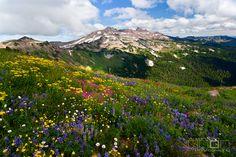 Wildflower Bouquet | Flickr - Photo Sharing!