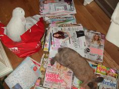 Ryddegutta!!! /  We´re helping mommi cleaning out this magazine stuff.... 2014/IJ