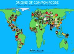 Origins of common foods.