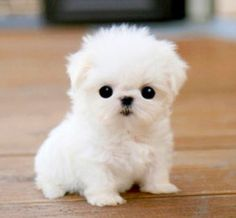 Sweet And Cute Puppies Dp For Whatsapp Awesomeness Puppies Cute
