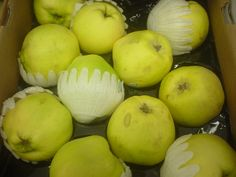 Quince fruit still in season -- add some zip to your recipes! Ever tried these?