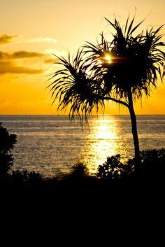 i miss u cali! Beautiful Sky, Beautiful Space, Beautiful Pictures, Palm Tree Sunset, Palm Trees, Japan Beach, Shades Of Yellow, Yellow Black, Dawn And Dusk