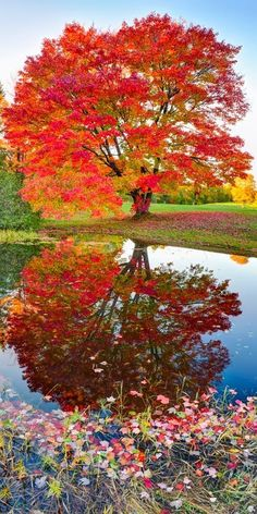 on Caring for Your Trees Twin Lakes State Park, Upper Michigan; photo by Igor MenakerTwin Lakes State Park, Upper Michigan; photo by Igor Menaker All Nature, Amazing Nature, Autumn Nature, Flowers Nature, Pretty Pictures, Cool Photos, Fall Pictures, Nature Pictures, Fine Art Photography