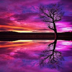 Magenta Reflection.