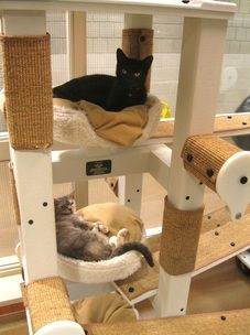 Wonderful shelter cat furniture. #cats #CatTree
