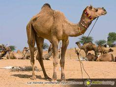 En @FactorHobby sabemos dónde aparcan los #ReyesMagos sus camellos... ¿Quieres que te traigan un juguete divertidísimo, un radiocontrol alucinante, una pista de slot molona o un puzzle precioso? #navidad #ideasregalos #juguetes #ocio #amigoinvisible #regalosperfectos Entra en http://www.factorhobby.com  y PIDE YA tus regalos!! ►Envío en 24hrs ►Atención online inmediata ►Respondemos tus consultas
