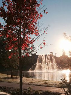 This photo taken this morning shows why Autumn is so great here on the Coastal Carolina University campus. Not only do you get to observe the leaves changing colors but you also get to enjoy plenty of sunshine: