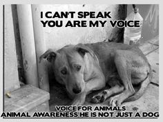 """You Are My Voice. He Is Not """"Just A Dog""""."""