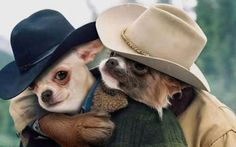 chi's version of brokeback mountain  now all they need is their horses