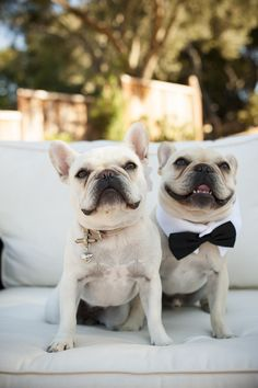 Deck out the fur babies too! | Photography: Viera Photographics - vieraphotographics.com Wedding Design: A Stylish Soiree - astylishsoiree.com Floral Design: Branch Out Floral and Event Design - branchoutflowers.com  Read More: http://www.stylemepretty.com/2013/01/14/san-francisco-home-wedding-from-viera-photographics/