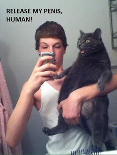 The cats face lmao
