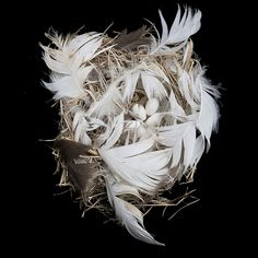 Tree Swallow Nest   Cornell Lab of Ornithology   photo by Sharon Beals