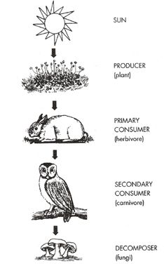 food chain Biodiversity Pinterest Food chains and Teacher
