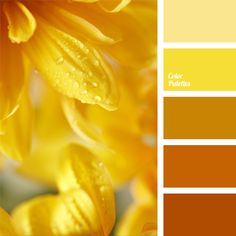 Monochrome orange palette. Warm bright colors have a very positive effect on human emotions, giving a person a good mood and joy. In interior design it is.
