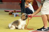 Pet Centrics: Basic Obedience Group Class (for Beginners)