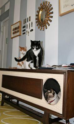 cat furniture:) #cats