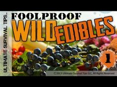NEW! Foolproof Wild Edible Plants #1 - Easily Identify Common Wild Plants that You Can Eat