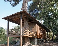 shipping-container-cabin-tree