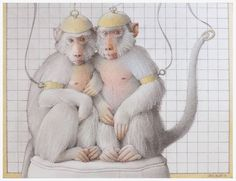 "Jane Lewis ""Earthlings - Laboratory Monkeys"" (graphite and coloured pencil on paper) Jane Lewis, Coloured Pencils, Documentary Film, Monkeys, Documentaries, Graphite, Paper, Animals, Art"