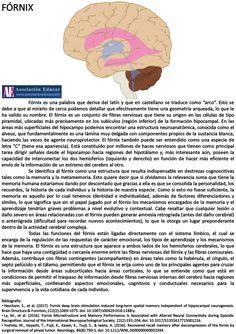 El fórnix es un conjunto de fibras nerviosas indispensables en destrezas cognoscitivas tales como la memoria y la metamemoria. Destacar que el fórnix está ligado directamente con el sistema límbico. ¡Échale un vistazo! Ilustración neurociencias: Fórnix (2017). Asociación Educar para el Desarrollo Humano. Retrieved 26 May 2017, from asociacioneducar.com  @mjromerotirado #psicologiafisiologica #uhu