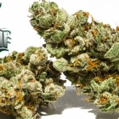 SFV OG Kush makes you feel relaxed, euphoric, sleepy, happy and uplifted. If you want to treat #stress, pain, #insomnia, #depression and muscle spasms, then order it now from #PotValet! #PotValetSantaBarbara #medicalmarijuana #medicalcannabis #weed #marijuanadelivery #buySFVOGKush #SFVOGKush #SFVOGKushSantaBarbara