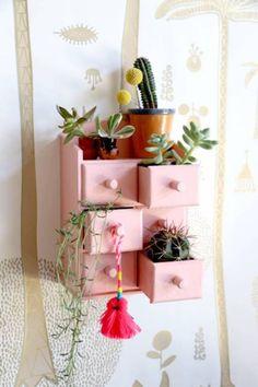Mini DIY Cactus Cupboard – Home and Garden