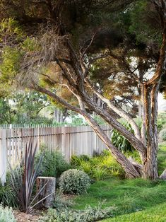 The perfect Mornington Peninsula plot inspired a Melbourne family to build their dream beach house. Take a tour of the home which boasts a concrete and charred timber materials palette. Australian Garden Design, Australian Native Garden, Timber Gates, Dream Beach Houses, Night Garden, Terrace Garden, Exotic Plants, Winter Landscape, Garden Inspiration
