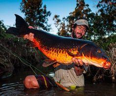 Fly fishing for carp, Damien Brouste