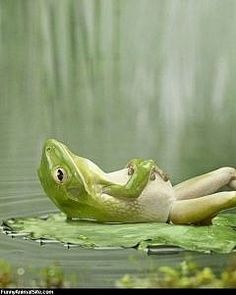 Chilling frog   ...........click here to find out more     http://googydog.com
