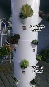 Visit this page to find the link to my Tower Garden website, and to see pictures of the initial set up process...