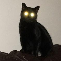 Black Cat Aesthetic, Animals And Pets, Cute Animals, Arte Punk, Cat Icon, Cat Memes, Cool Cats, Creepy, Grunge