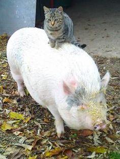 Schwein Rosalie hat 'nen Katzenbuckel - Leserreporter - Bild.de