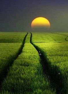 ♂ Amazing nature Field of Dreams solo sunset grass field