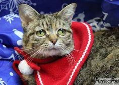She is currently living at Purrfect Pals , a shelter in Washington state that focuses on special needs cats.