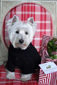 Really?? You don't have a tartan plaid anything??