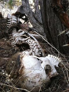 suicide forest japan - Google Search