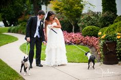 The happy wedding couple with their pair of Boston Terriers!!!
