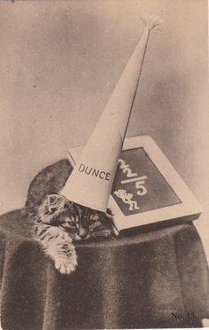Dunce cat.