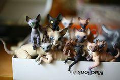 [Image] Aujourd'hui, j'étais à une fête chez Oli oleum poupées: http://oleum-13.livejournal.com/ et j'ai eu la chance d'être jouées simultanément avec 17 chats ou plus, et en même temps de faire quelques clichés) Ce K. ... - Chercheto-mobile