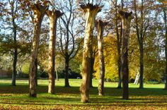 Installation in the grounds of Mottisfont Abbey, Hampshire, by Elpida Hadzi-Vasileva. Nov 2013.